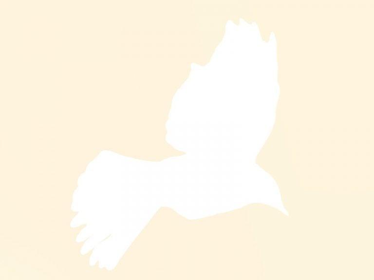 Güvercinlerin Karpuz Fidesi Şenliği